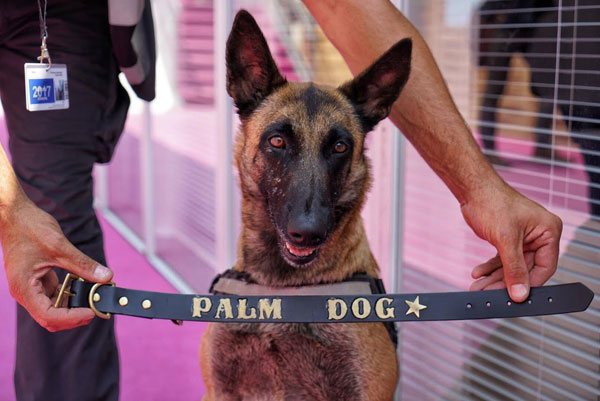 palm-dog