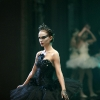Black-Swan-10
