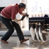 Poppers-Penguins-3